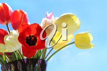 Bouquet of colorful bright tulips in a glass vase