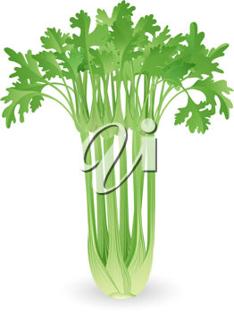 Royalty Free Clipart Image of a Bunch of Fresh Celery