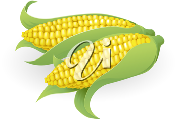Royalty Free Clipart Image of a Sweetcorn