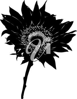 Sunflower stencil silhouette isolated on white