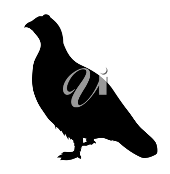 Royalty Free Clipart Image of a Partridge