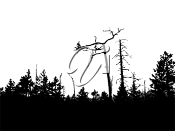 Royalty Free Clipart Image of a Forest Background