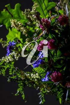 Bouquet with clover and cornflower. Flowers on dark background. Nature flower. Rural flowers on black background. Floral bouquet from wild summer flowers on dark background.