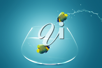 Royalty Free Photo of an Angelfish Jumping Out of a Fishbowl With Water Spraying
