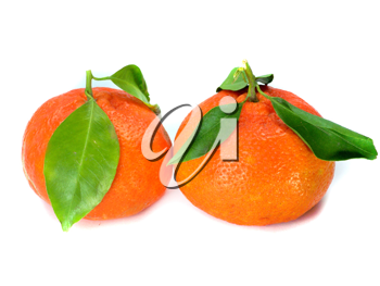 Fresh tangerine with leaves isolated on a white background