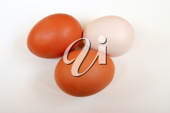Egg of the hen on white background is insulated