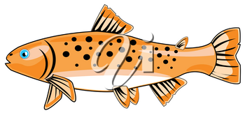 River fish trout on white background is insulated
