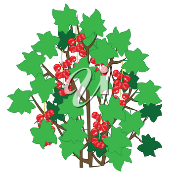 Bush with with berry red currant on white background is insulated