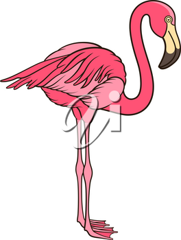 Pink flamingo isolated on white. This vector illustration can be used as a print on T-shirts or other uses
