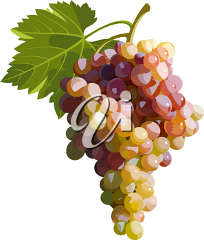 Vector illustration of a bunch of grapes