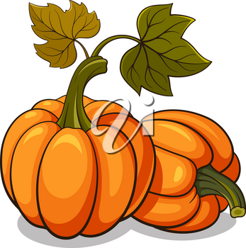 Vector illustration of ripe pumpkins isolated on white