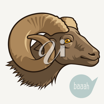 Head of sheep or ram . This vector illustration can be used as a print on T-shirts or other uses