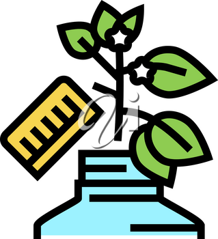 growing homeopathy plant color icon vector. growing homeopathy plant sign. isolated symbol illustration