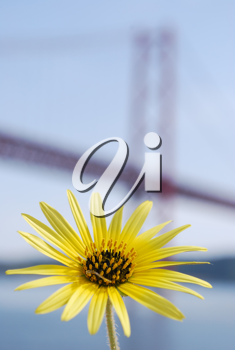 Royalty Free Photo of a Flower in Front of Salazar Bridge