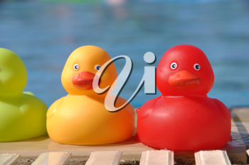 Royalty Free Photo of Rubber Ducks