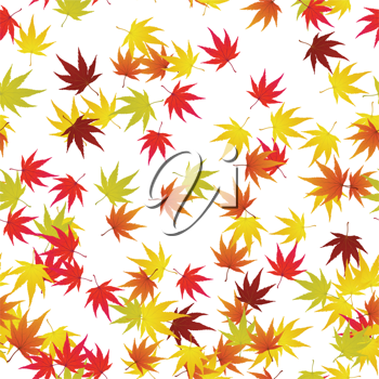 Seamless pattern of autumn  maples leaves. Vector illustration.