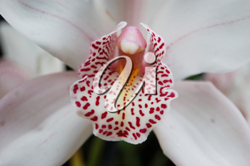 Royalty Free Photo of a Closeup of a Tropical Flower