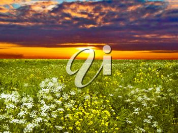 Royalty Free Photo of a Sunset Over a Field