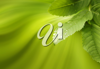 Green Nature Background With Leaves In Drops Of Water