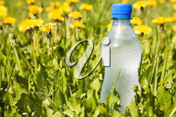 Royalty Free Photo of a Bottle of Water in Grass