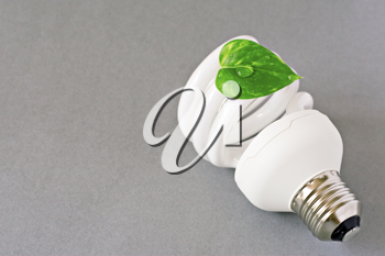 Royalty Free Photo of a Light Bulb