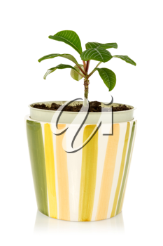 Royalty Free Photo of a Potted Plant