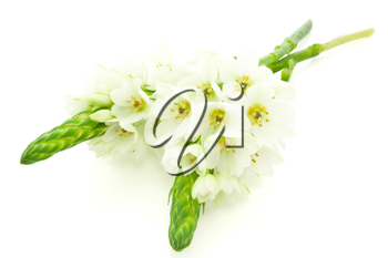 Royalty Free Photo of White Flowers