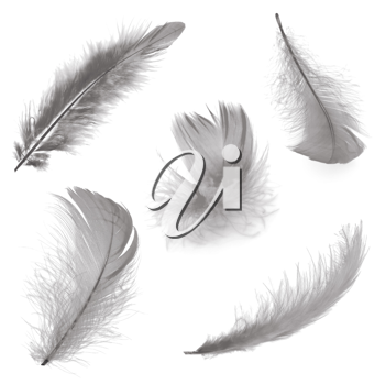 Five different feathers isolated on white background