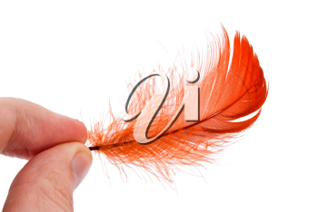 Elegant red feather in human hand