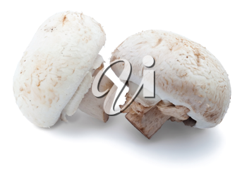 Two champignons isolated on white background