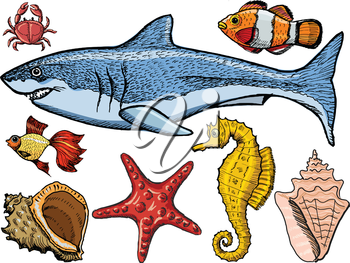 Set of sketch, hand drawn, vector illustration of sea life