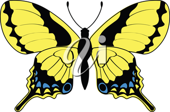 vector illustration of butterfly, insect