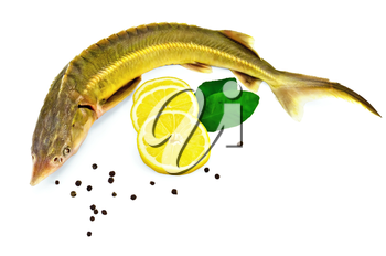Sturgeon fish with lemon, pepper and lemon green leaves two isolated on white background