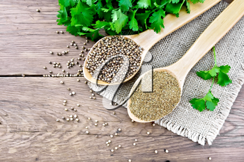 Coriander seeds and ground in two spoons on burlap, green fresh cilantro on a background of an old wooden board from above
