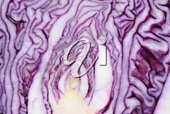Royalty Free Photo of Sliced Cabbage