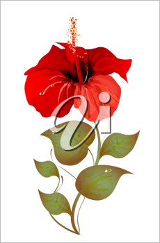 Royalty Free Clipart Image of a Hibiscus Flower