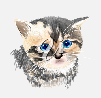 Portrait of three-colored kitten .  House pet.