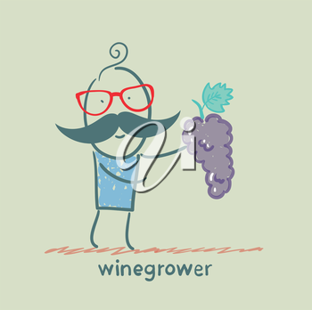 winegrower holds a bunch of grapes