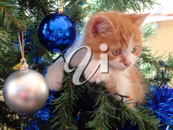 a small playing cat in the christmas tree.