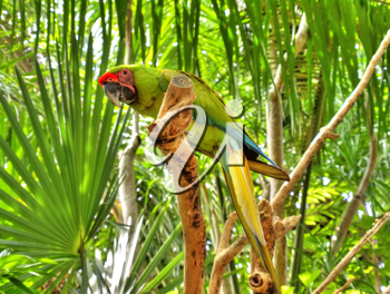 Parrot sitting on the branch with foliage background