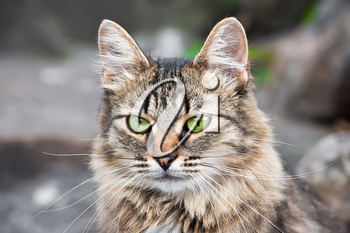 Beautiful close-up portrait of cat with green eyes