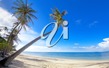 Royalty Free Photo of Palm Trees on a Beach