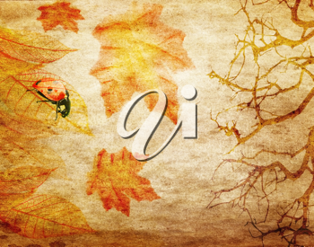 Royalty Free Photo of an Autumn Background