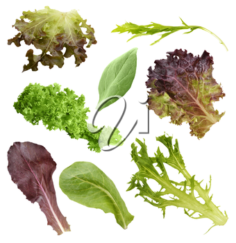 Salad Leaves Collection Isolated On White Background