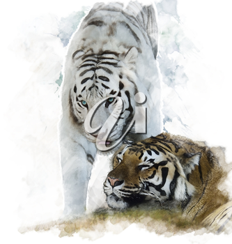 Watercolor Digital Painting Of White And Brown Tigers