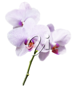 Digital Painting Of Purple Orchid Flower