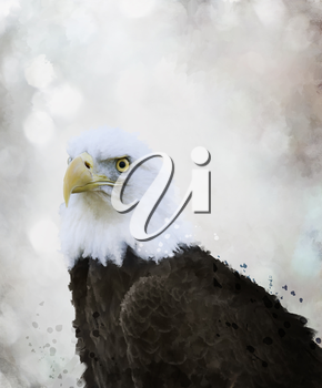 Digital Painting Of Bald Eagle