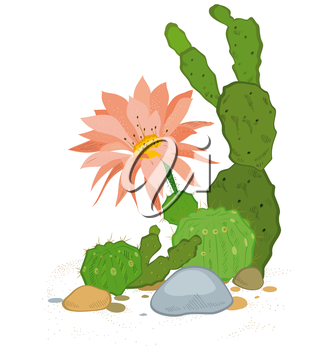 Hand drawn illustration of cactus blooms flowers isolated on white.