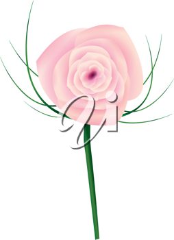 Royalty Free Clipart Image of a Pink Rose