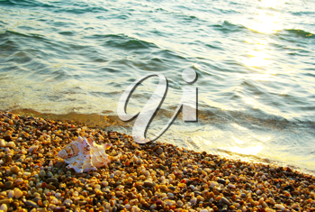 Royalty Free Photo of a Shell on the Beach